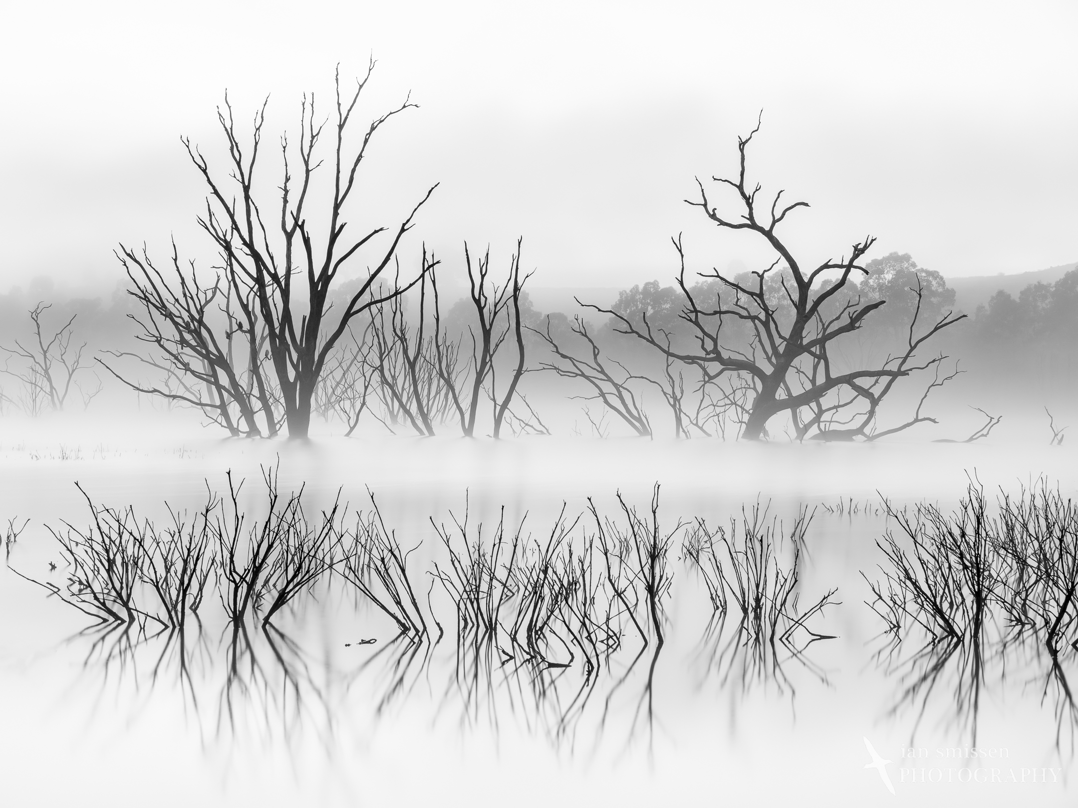 Lake Eppalock misty morning in black and white