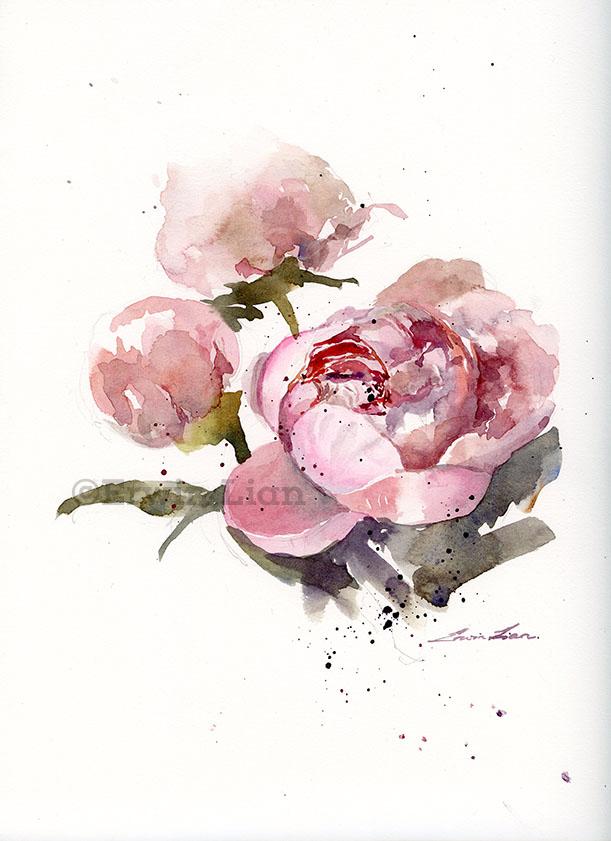 Peonies, Transparent watercolor