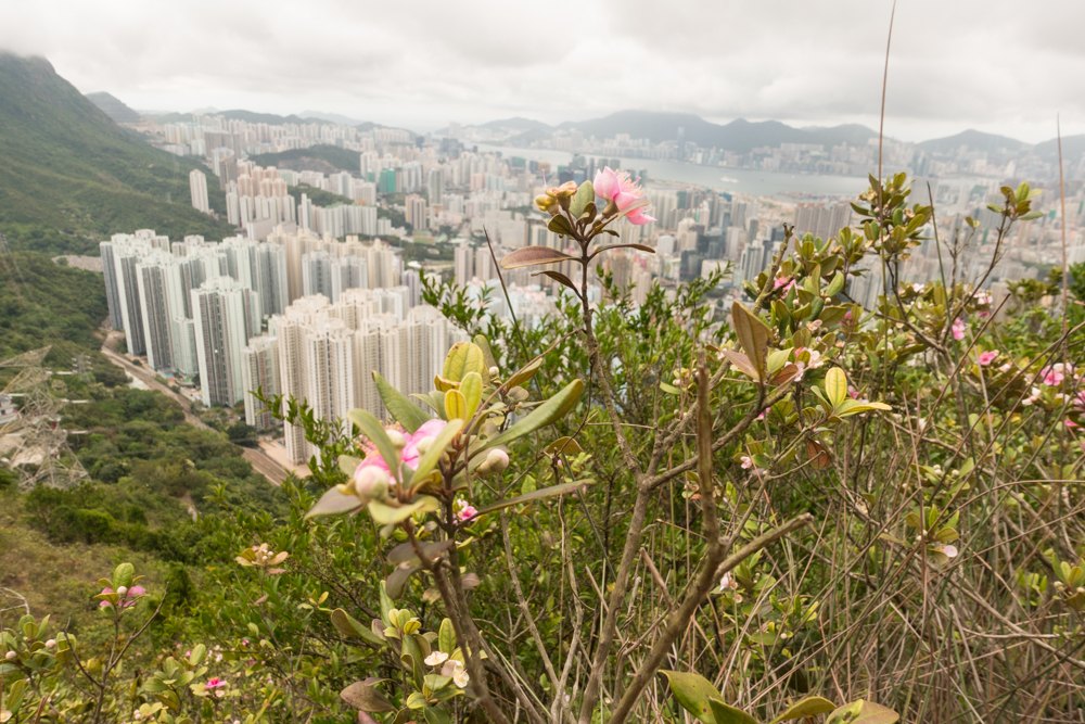 Even though Hong Kong is highly urbanized, there are many hiking trails surrounding this city. Beautiful for sure.