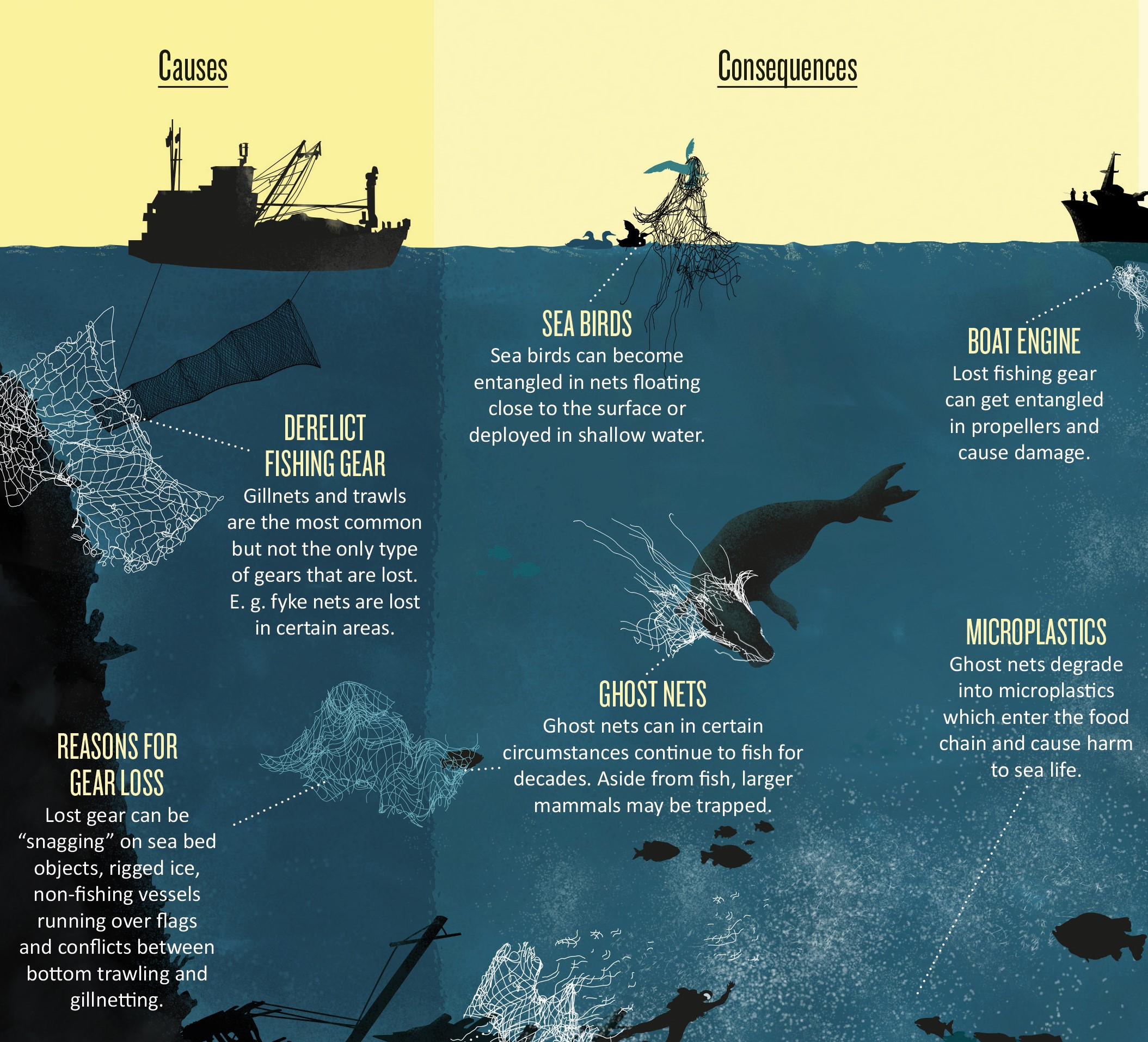 webb infographics.jpg