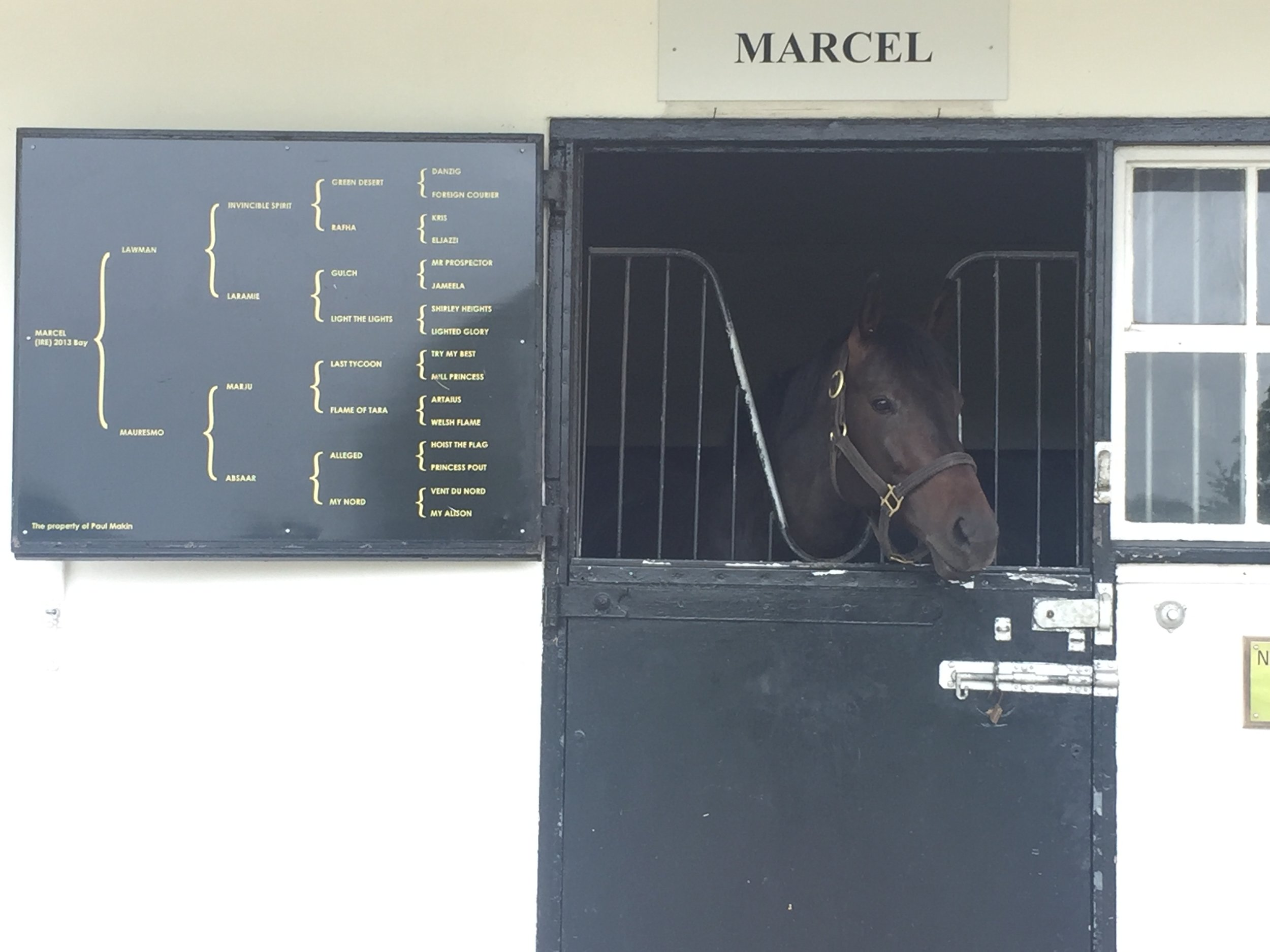 Marcel one of the stallions at the stud