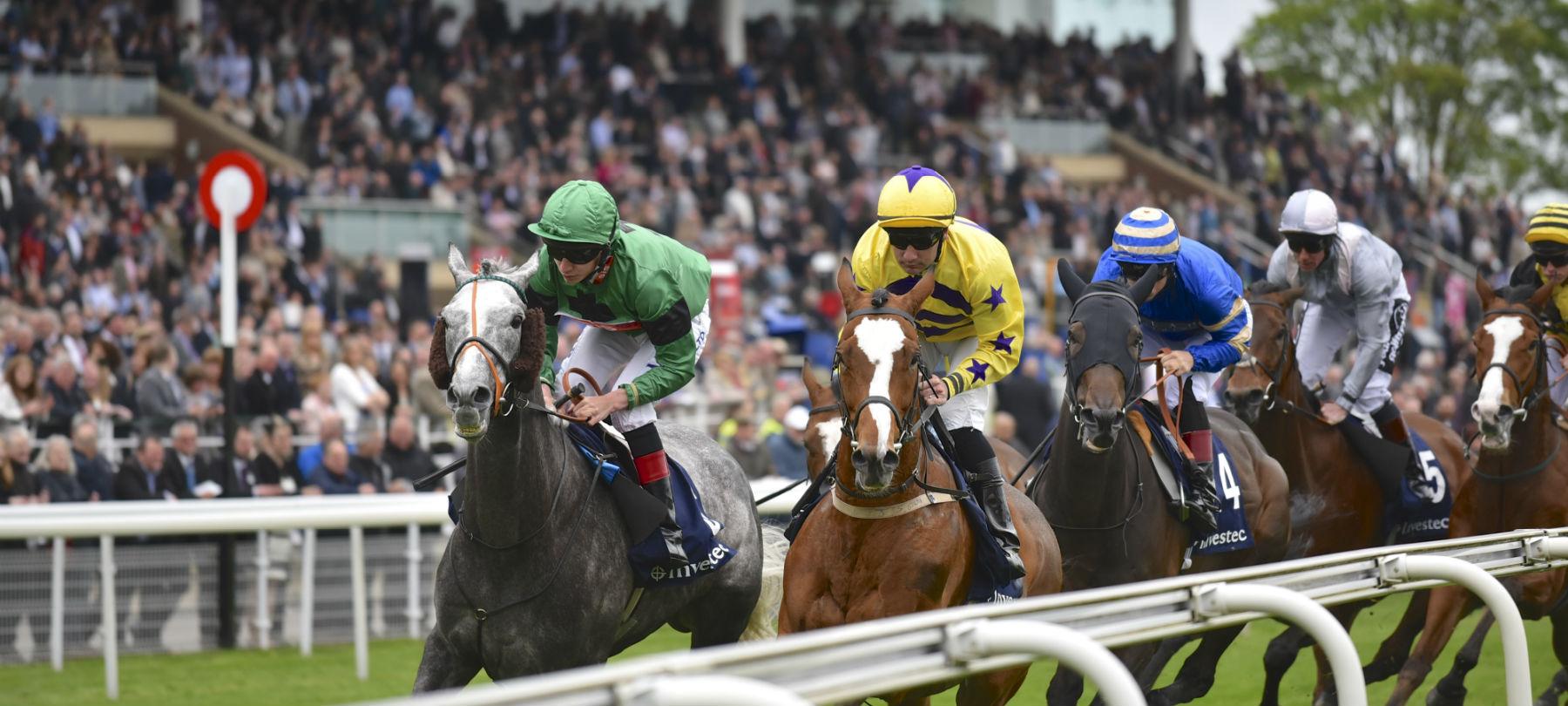 horses-racing-towards-hero.jpg