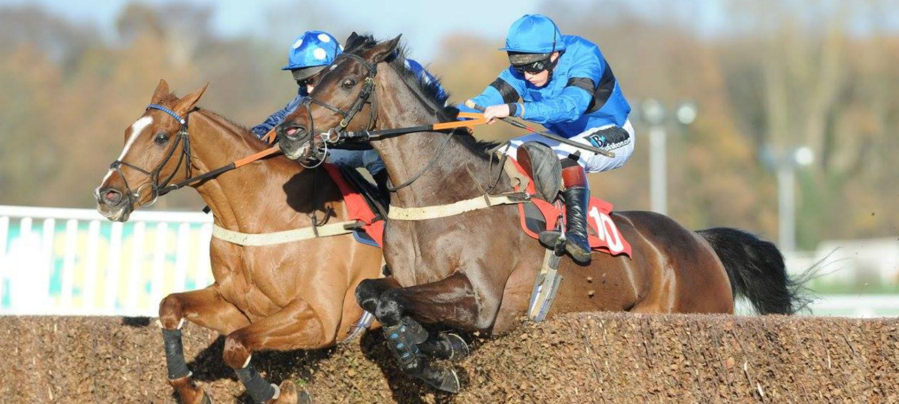 Copy of two-horses-jumping-hero.jpg