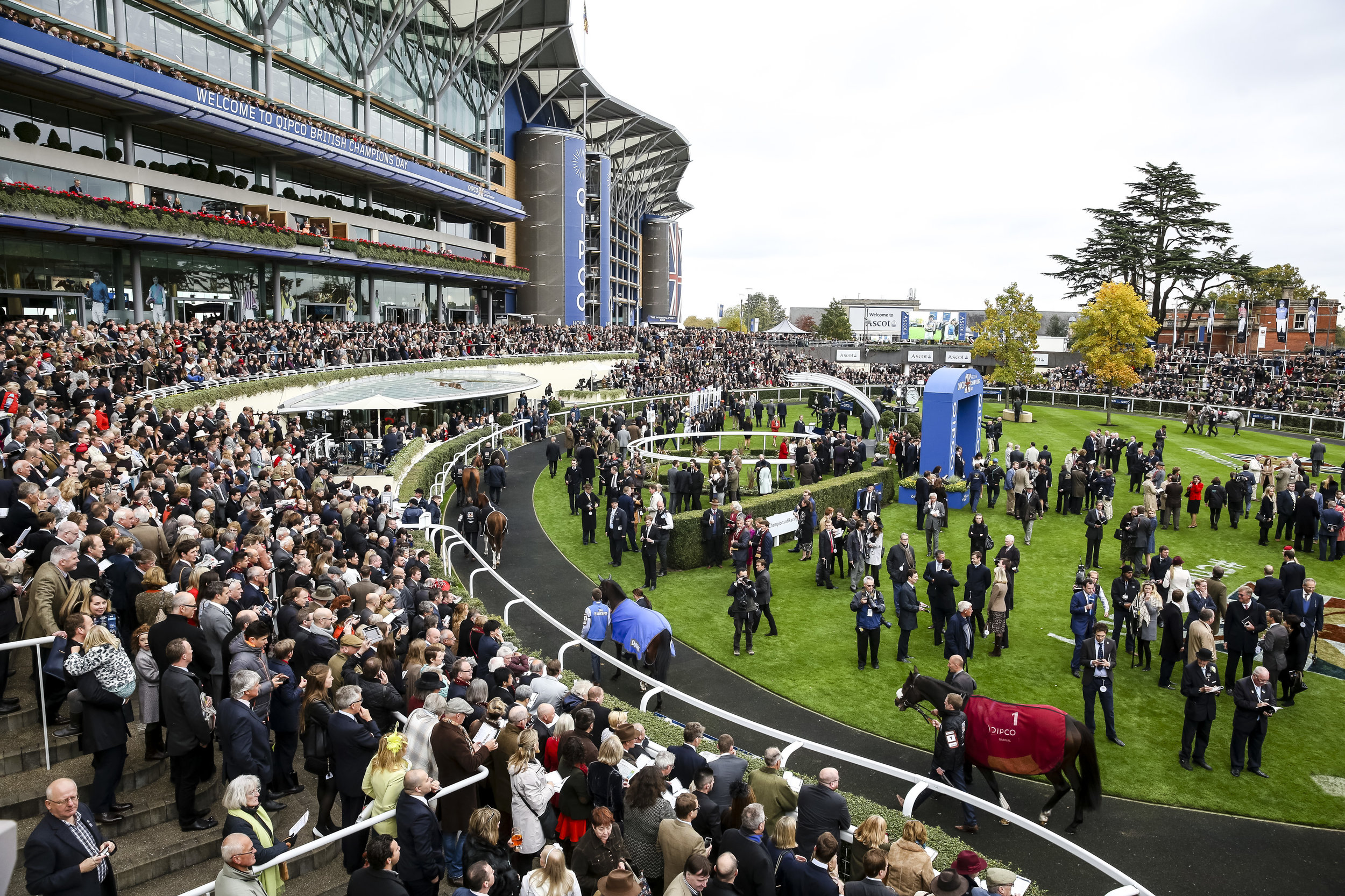 The Parade Ring on QIPCO British Champions Day