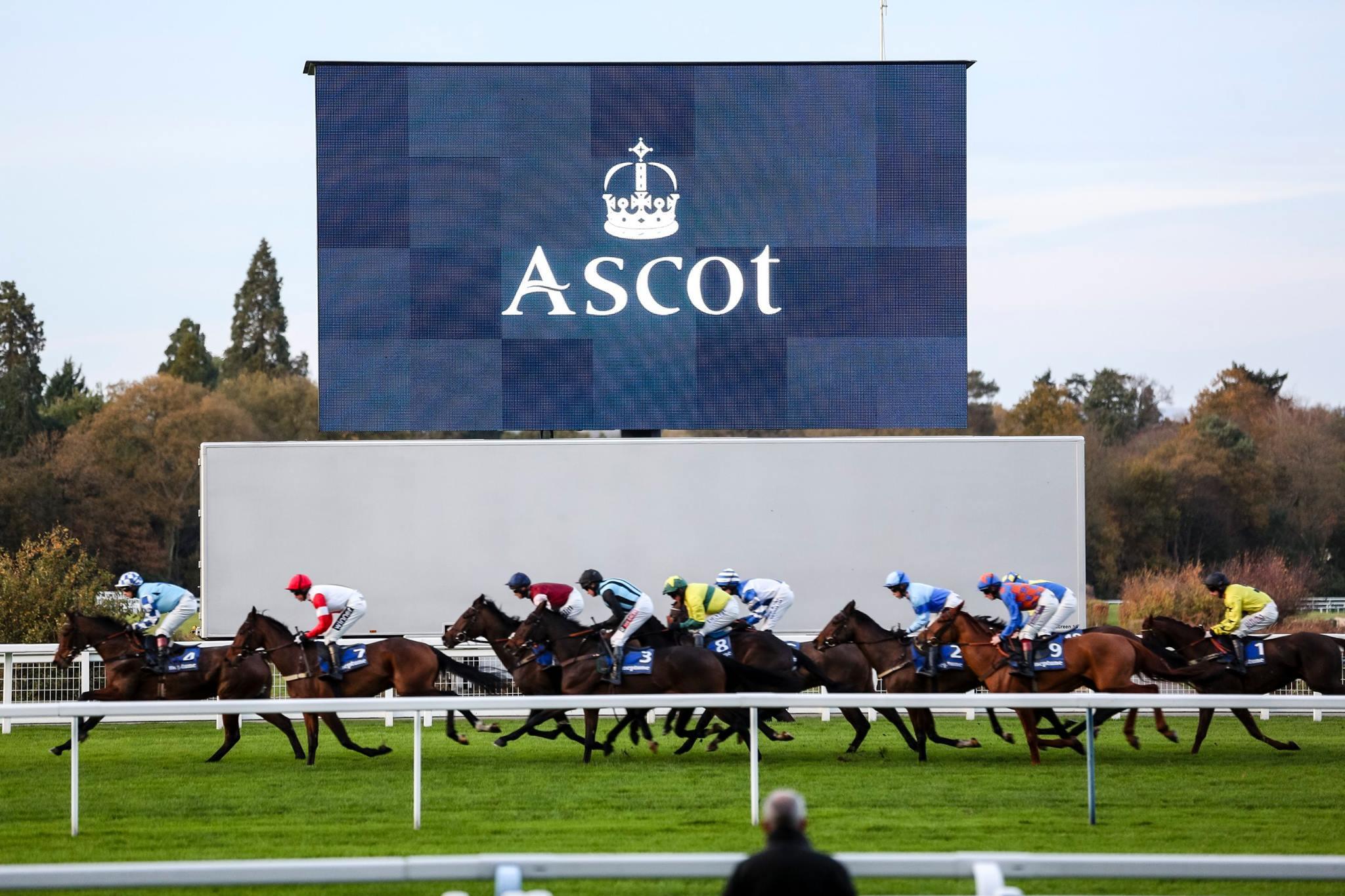 Copy of horses-racing.jpg