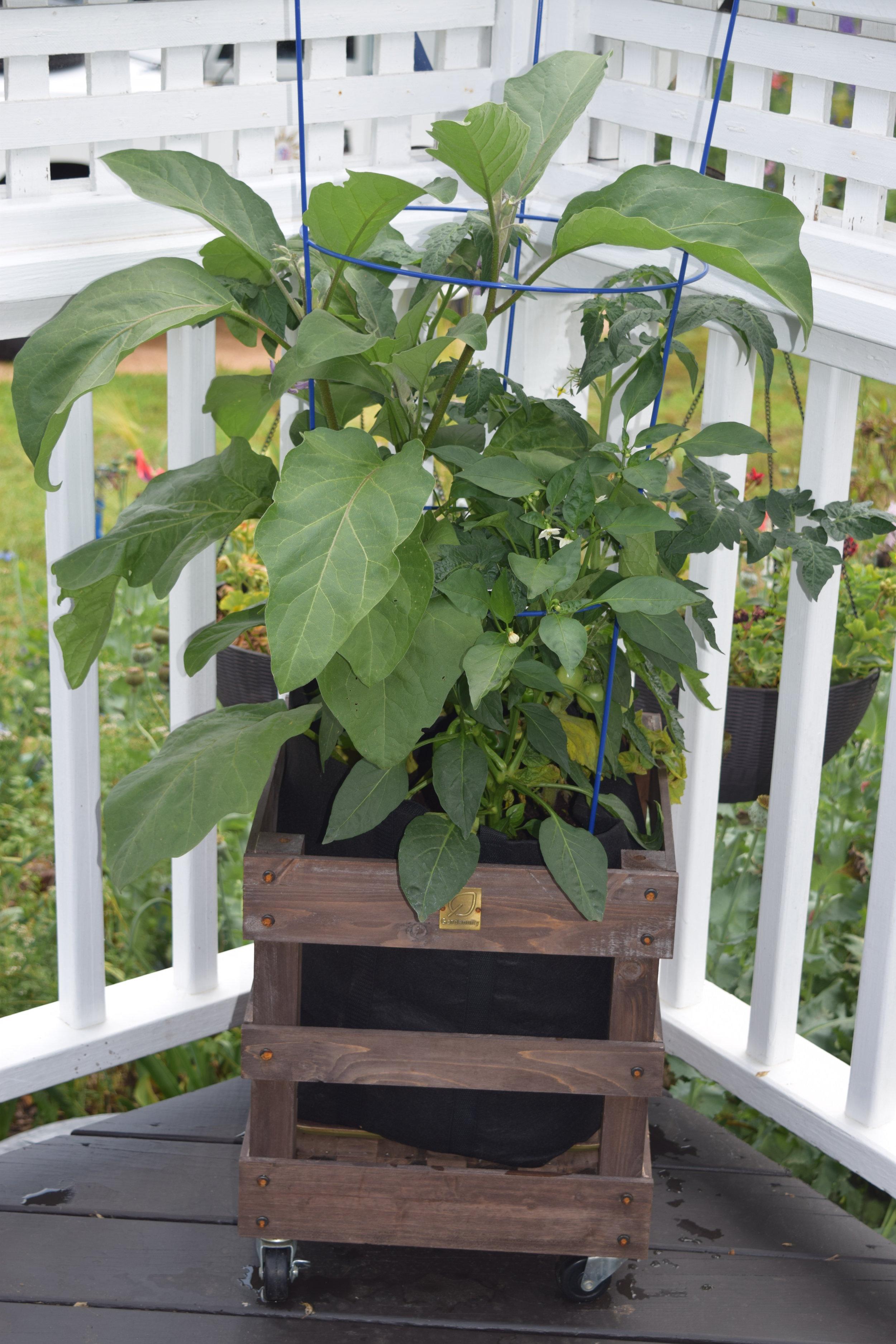 Gardenuity 5-26-18 095.JPG