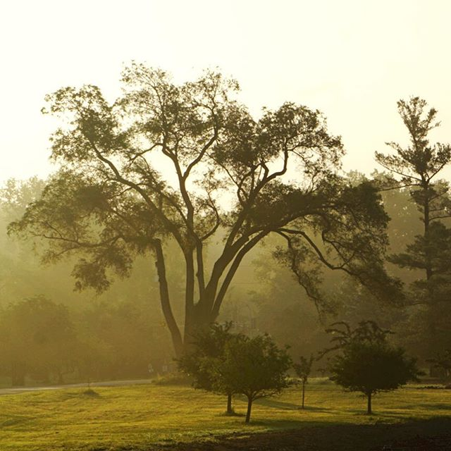 Foggy Morning; Misty early morning light makes the trees look sculptural. Water Works Park