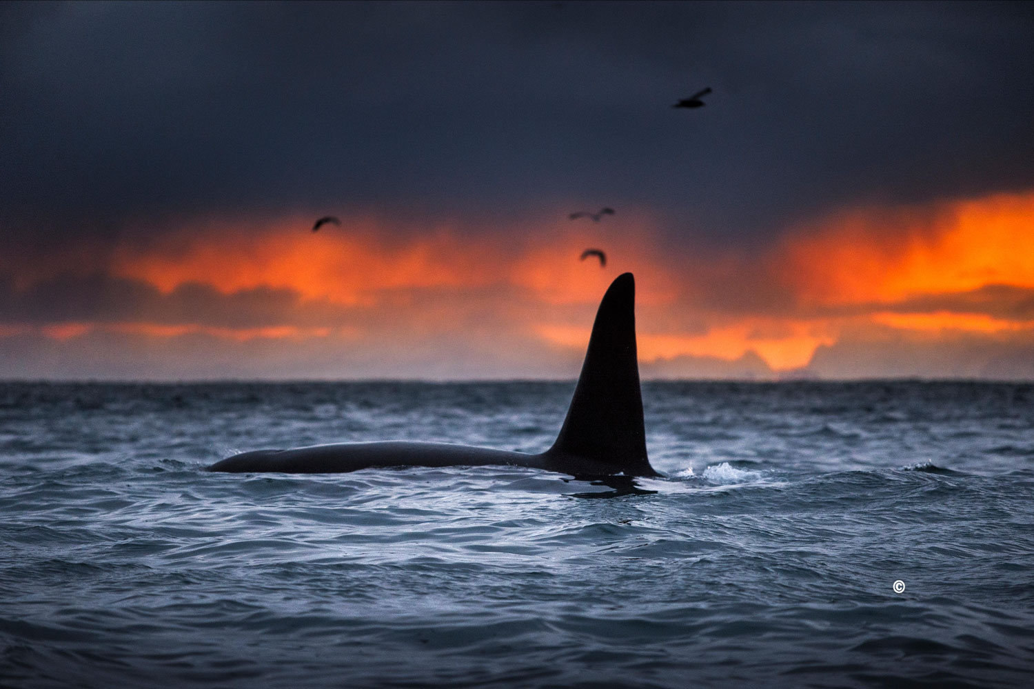 Do you like to take pictures, or are you good at storytelling?   PHOTO CONTEST    SCANDINAVIA PHOTO CONTEST