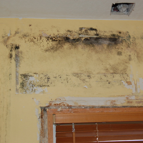 EXPOSED RESIDENTIAL MOLD