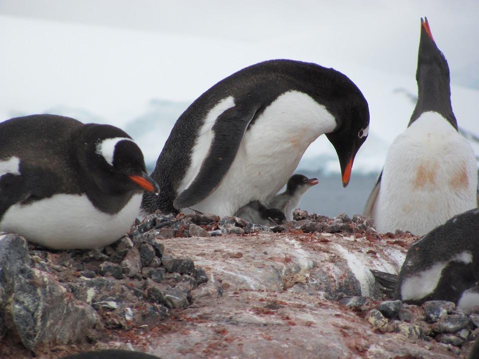penguin-2571361_960_720.jpg