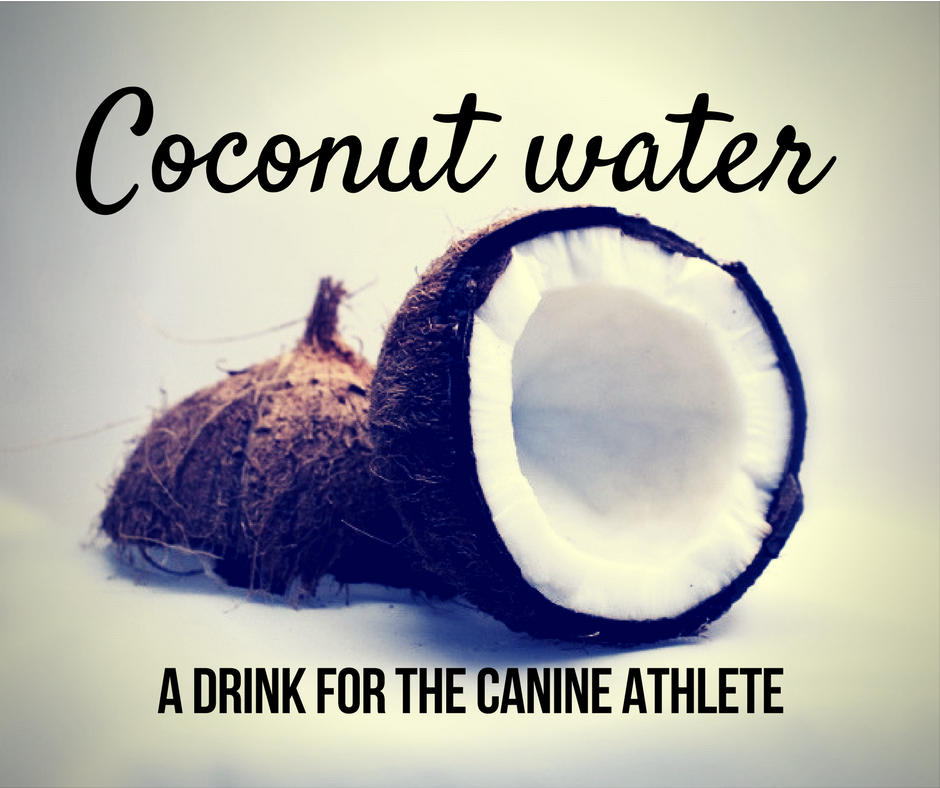 Coconut water : A drink for the canine athlete