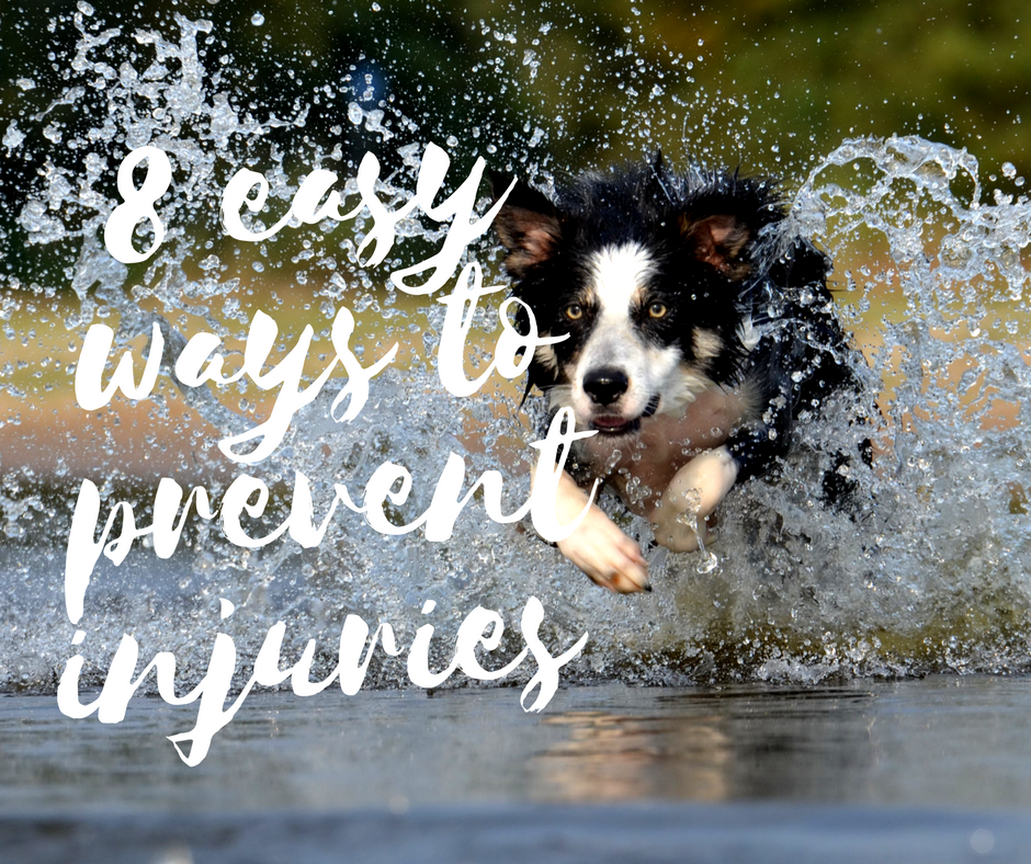 8 Easy Ways to prevent injuries in your sporting dog