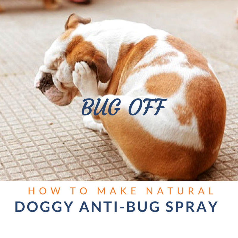 Bug off: How to make natural anti-bug spray for dogs