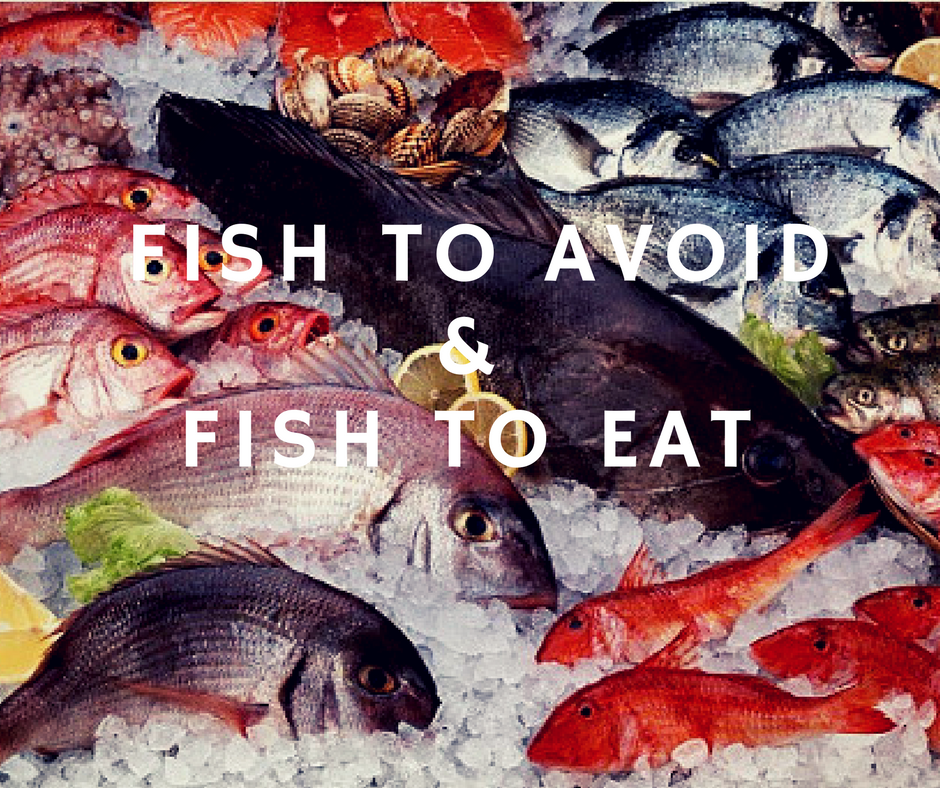 Fish for dogs : Which to avoid and