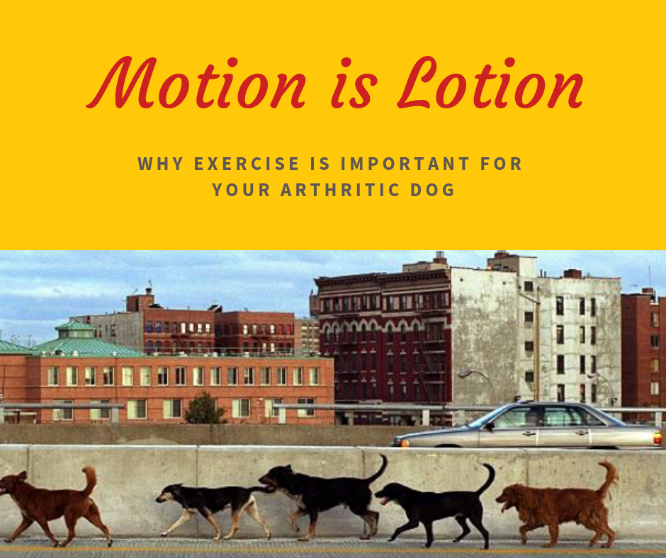 canine_muscleworks_motion is lotion.png