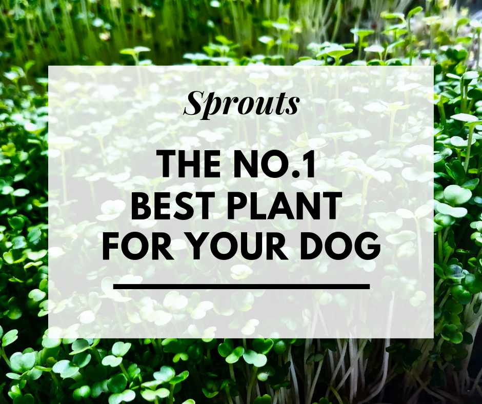 Sprouts_canine_muscleworks