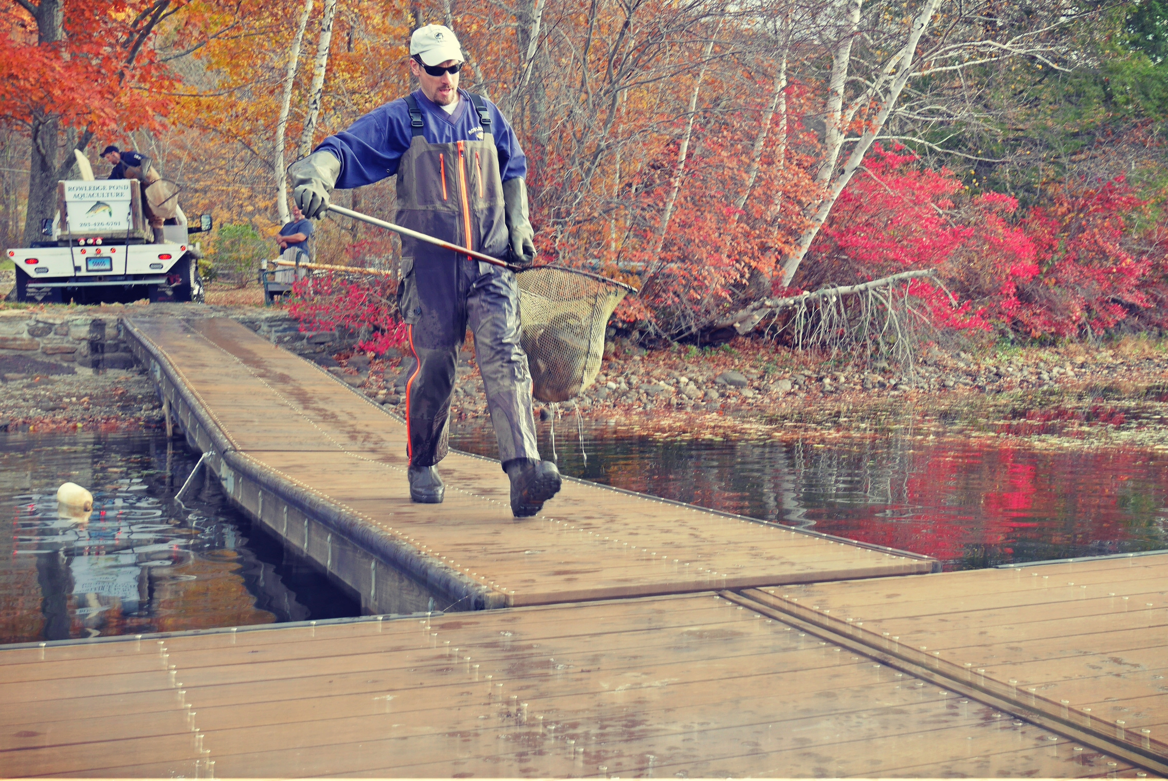 Rowledge Pond Aquaculture   stocking lake with Brown Trout