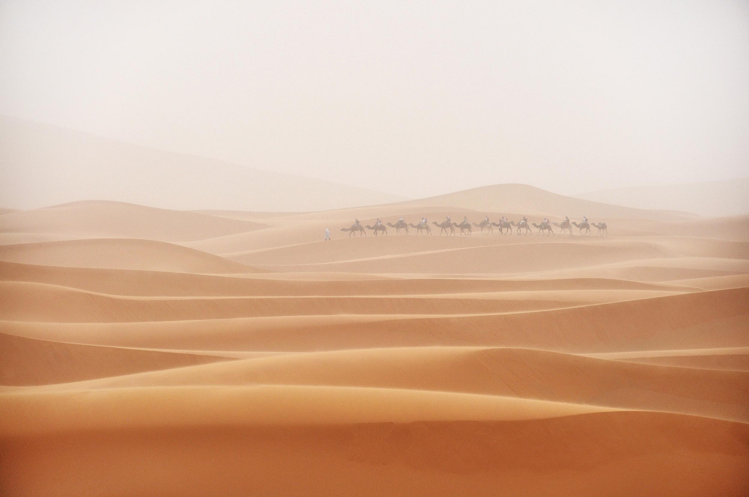 Camel Train   A camel train rides through a sandstorm in the Sahara desert, Morocco