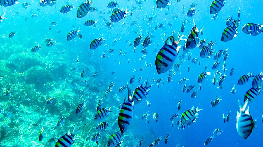 Underwater7.jpg