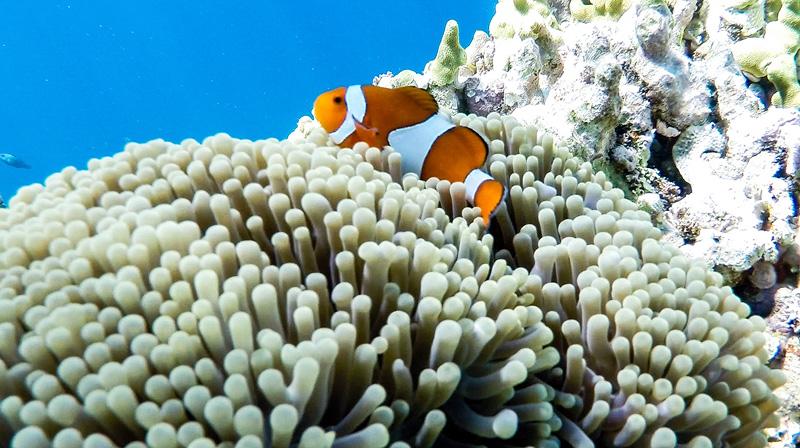 Underwater9.jpg