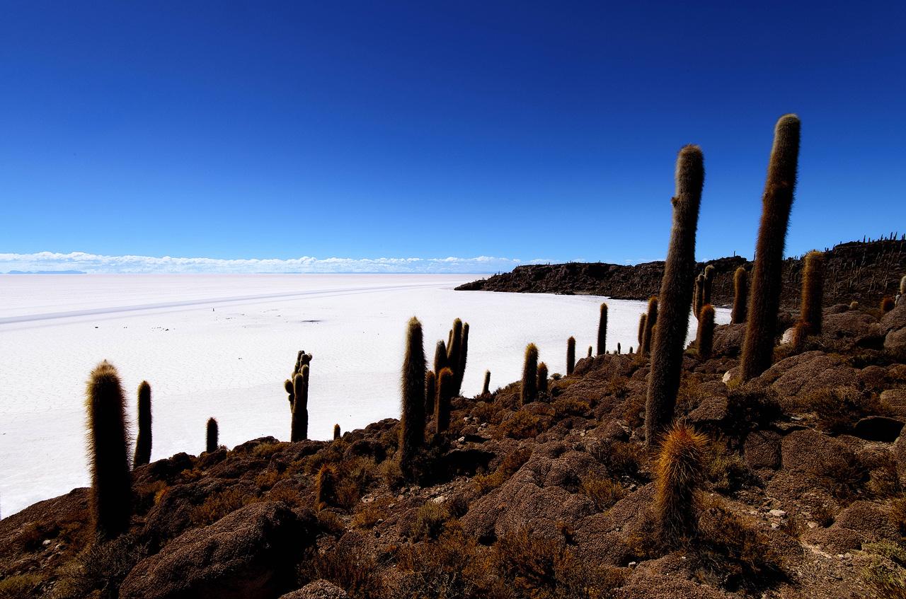Cactus-on-Incahuasi-island-Salar-de-Uyuni.jpg