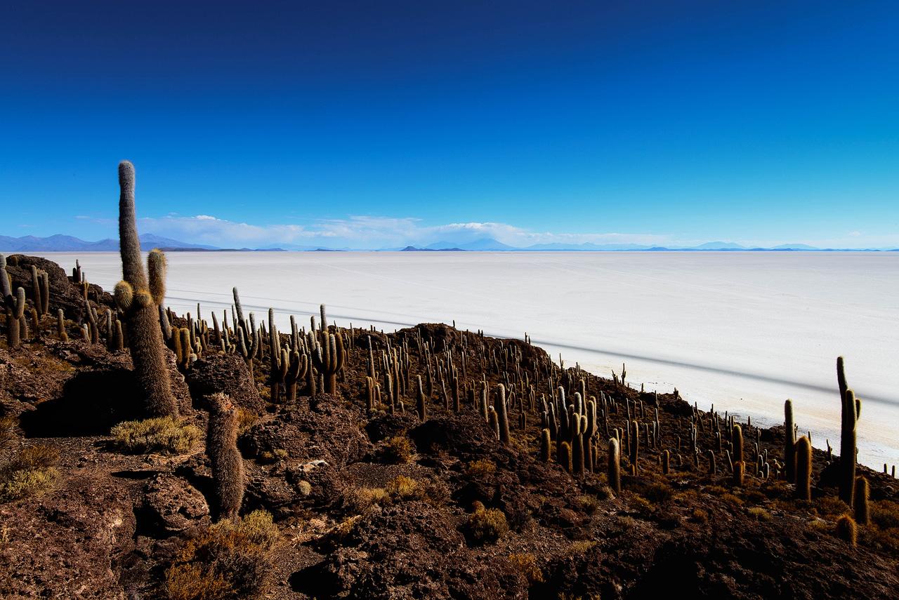 Cactus-on-Incahuasi-island-Salar-de-Uyuni-II.jpg