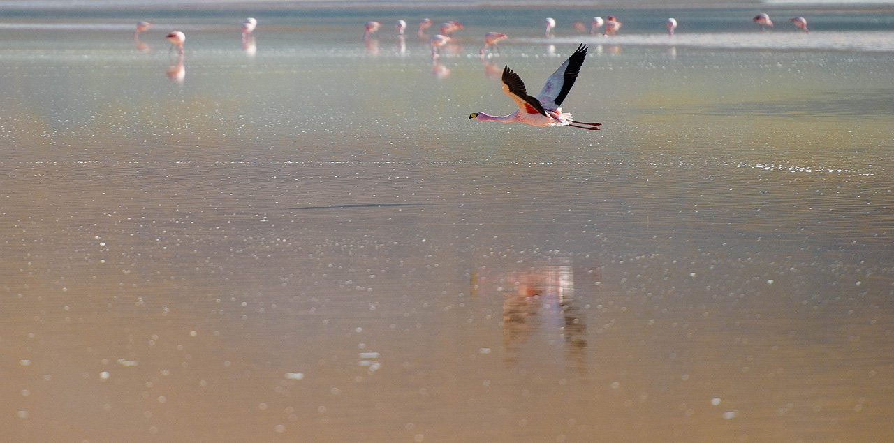 6b-Flamingos-on-Laguna-Colorada.jpg