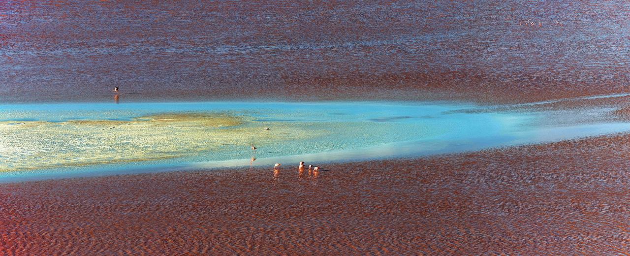 6-Flamingos-on-Laguna-Colorada.jpg