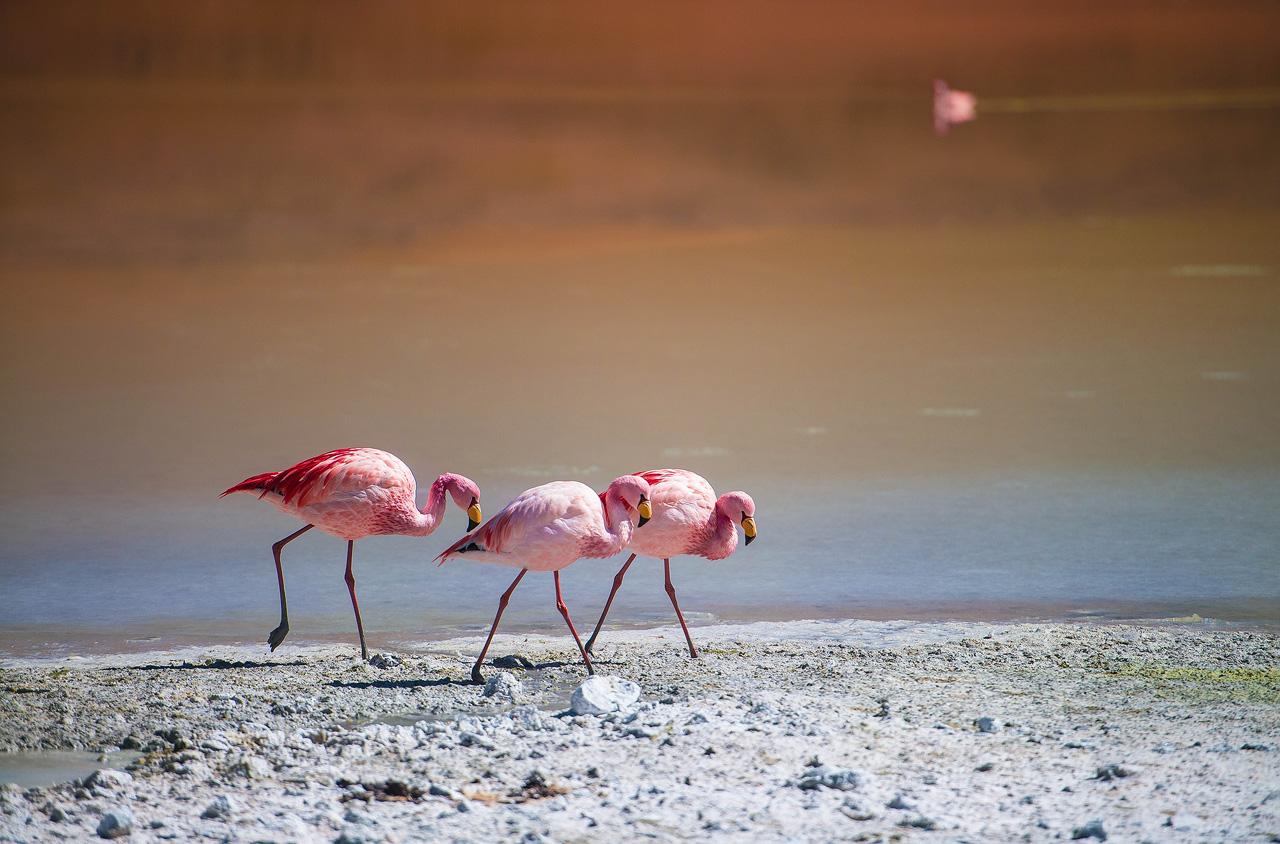 10b-Flamingos-on-Laguna-Hedionda.jpg