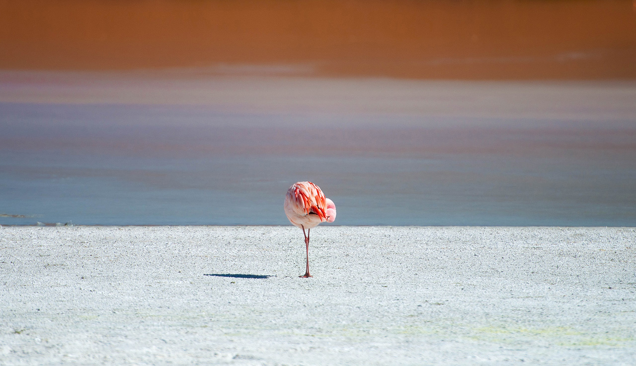 10-Flamingos-on-Laguna-Hedionda.jpg