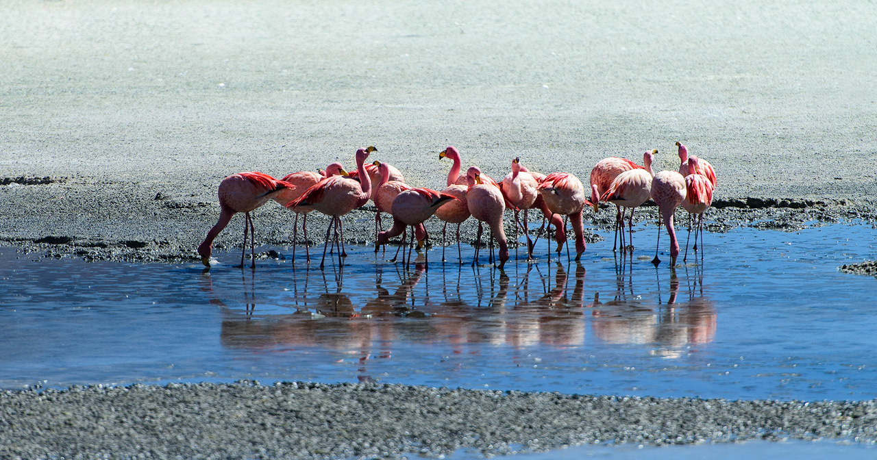 10e-Flamingos-on-Laguna-Hedionda.jpg