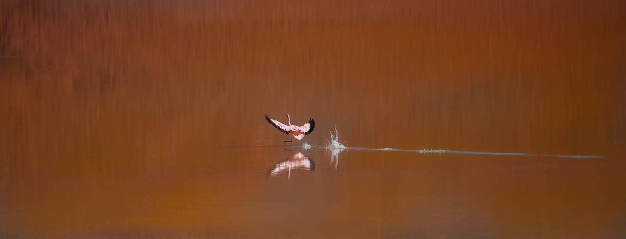 Flamingo-on-Laguna-Hedionda.jpg