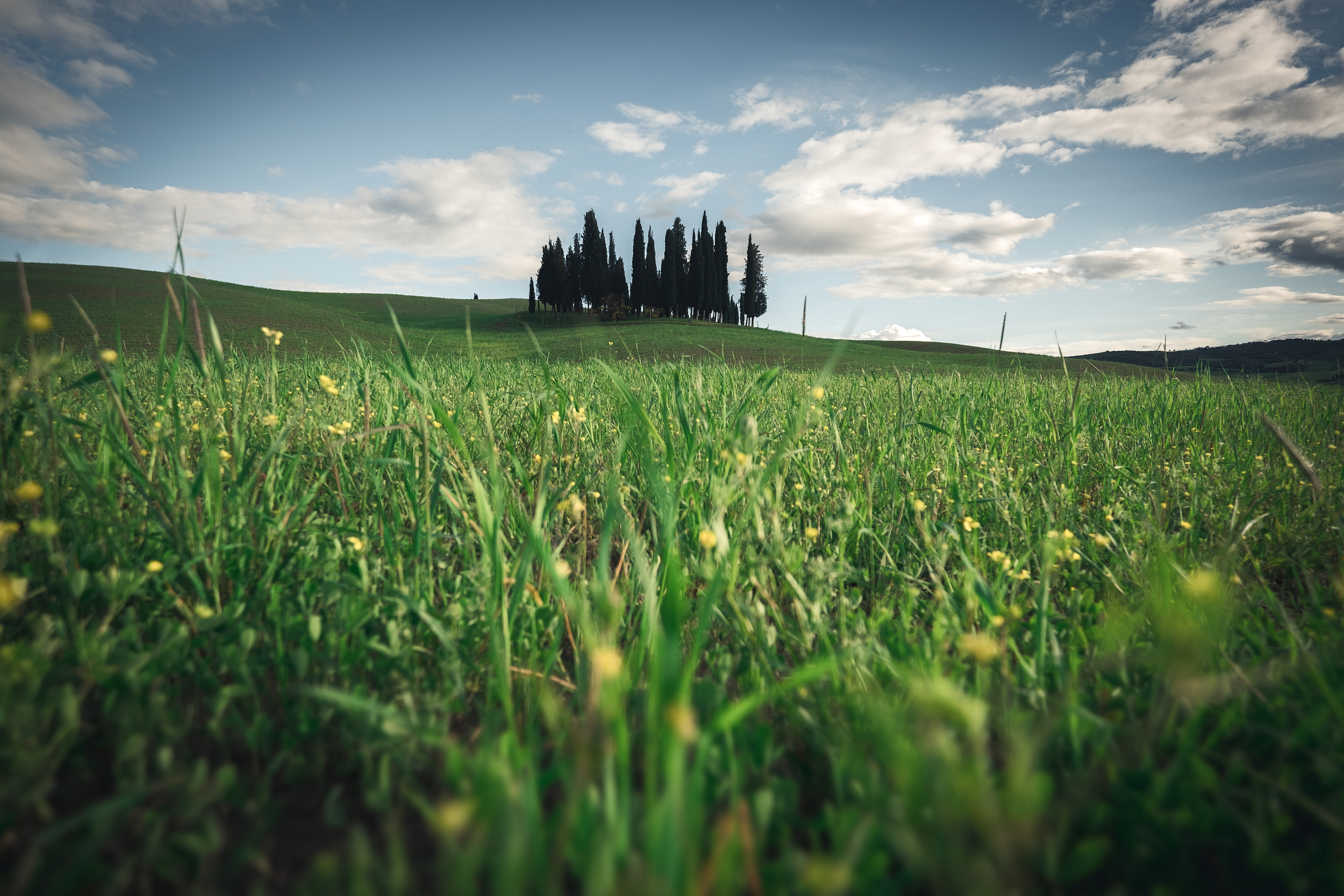 The iconic cypress trees near San Quirico d'Orcia