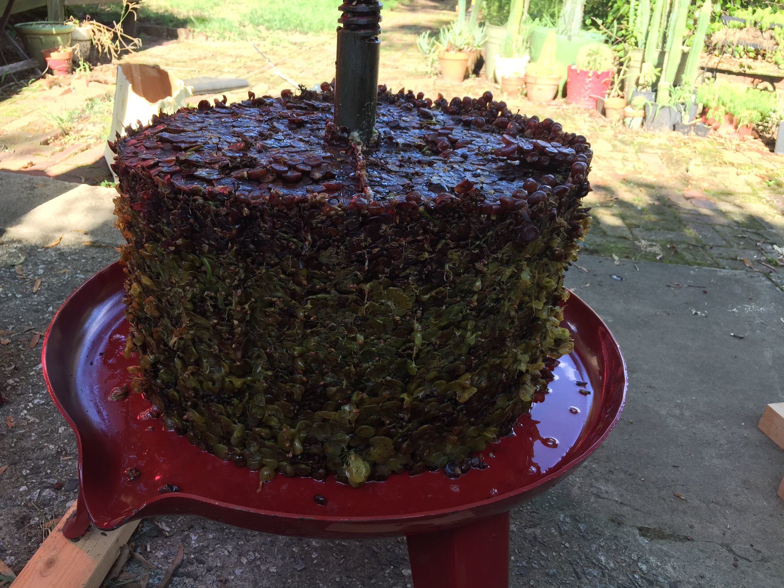 This is what 100 pounds of grapes looks like once it's been pressed