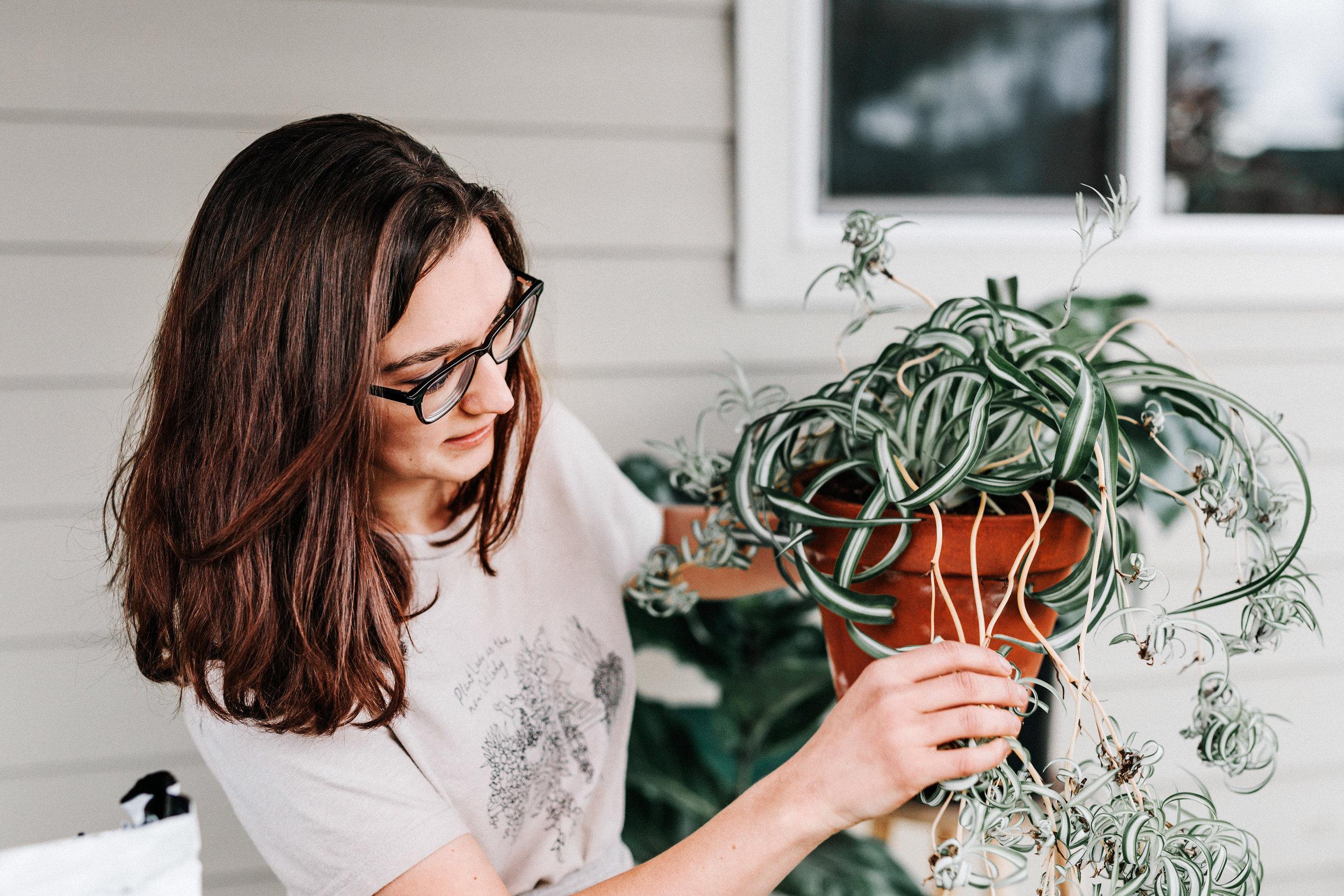 Spider Plant - dustyhegge.com.jpg