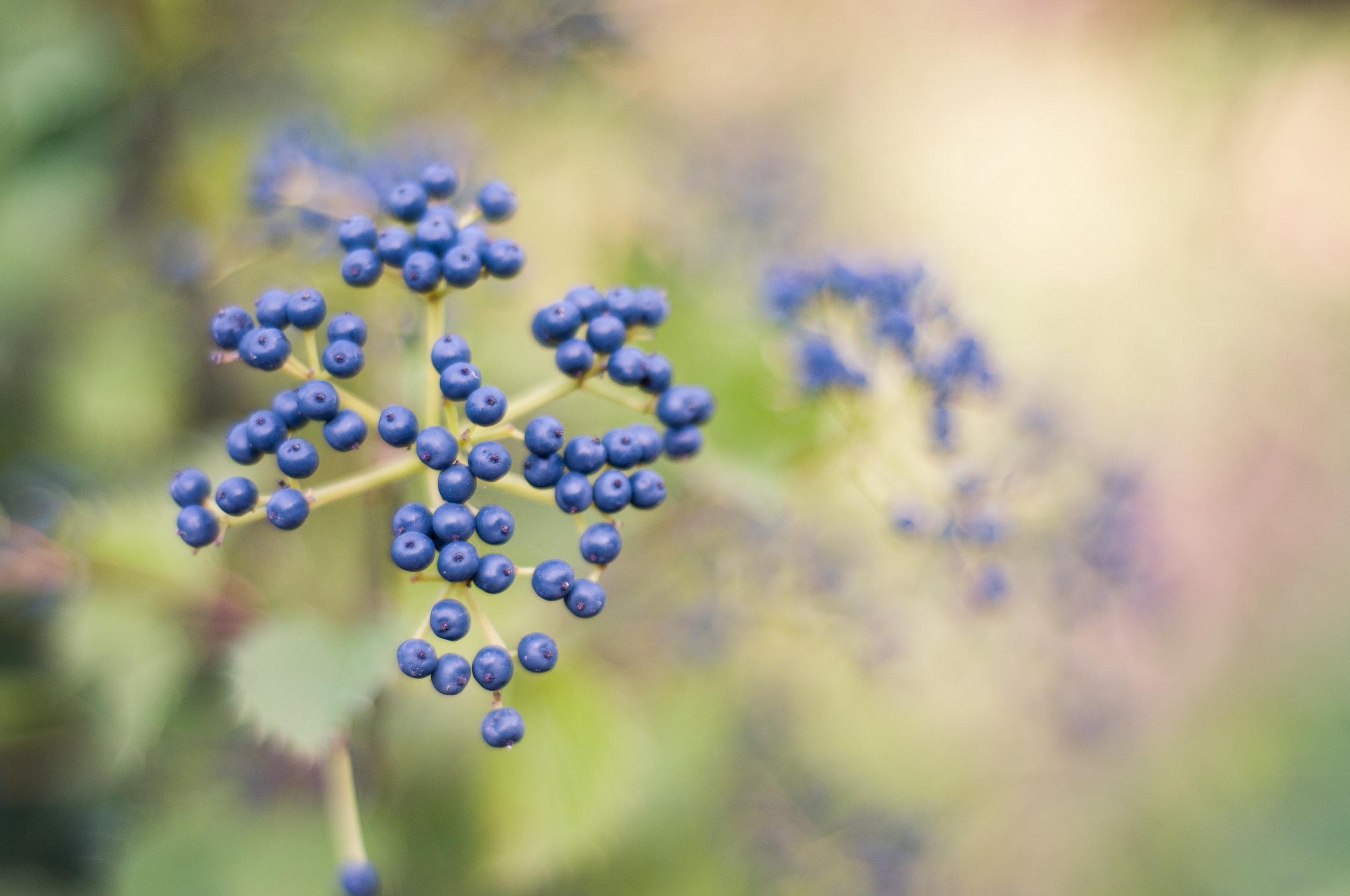 3-nature+.jpg