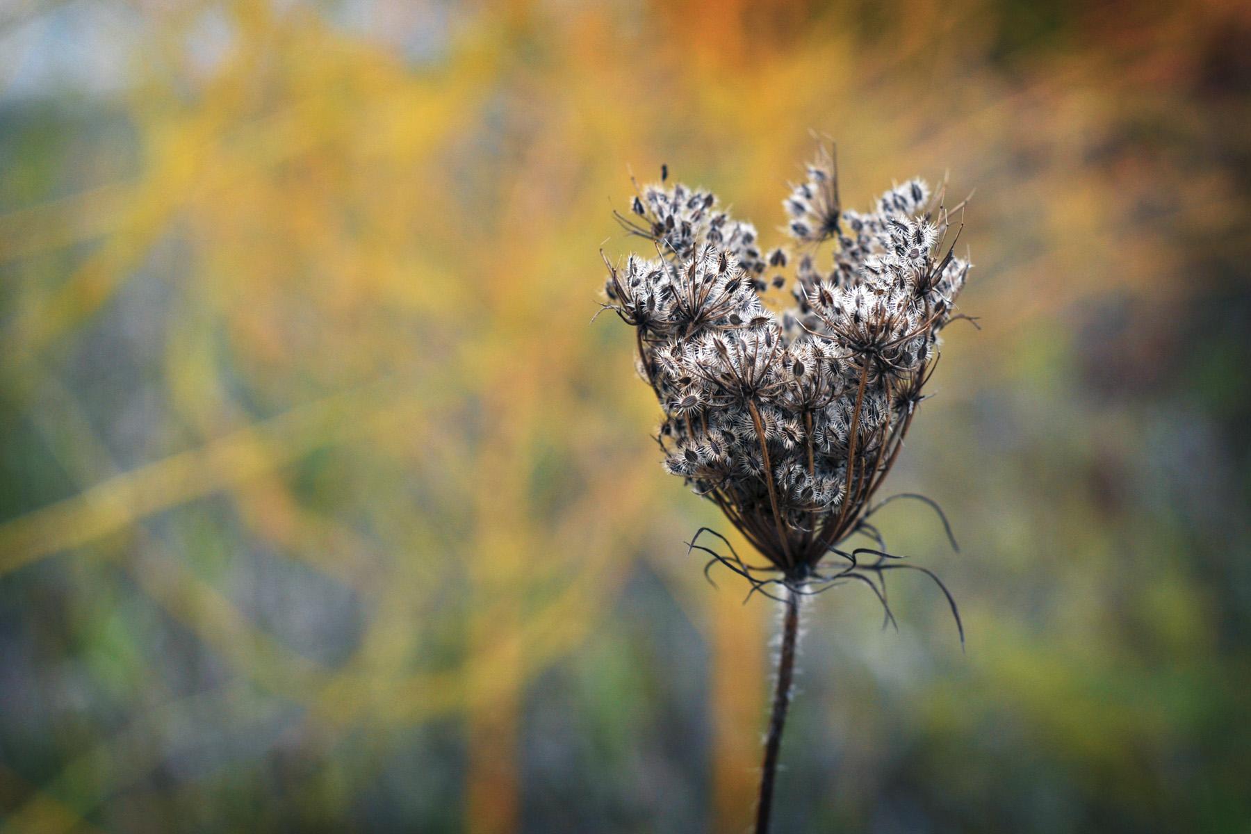 14-nature+.jpg