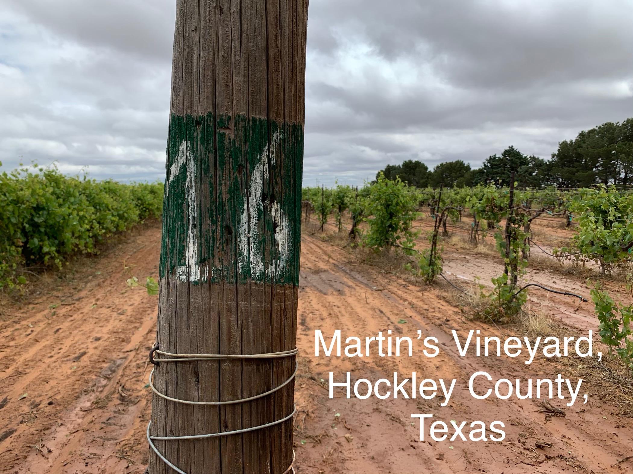 Texas wine for the people Rae wilson chenin blanc.JPG