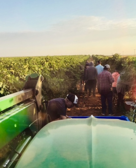 Picking crew at Hossfly Vineyard