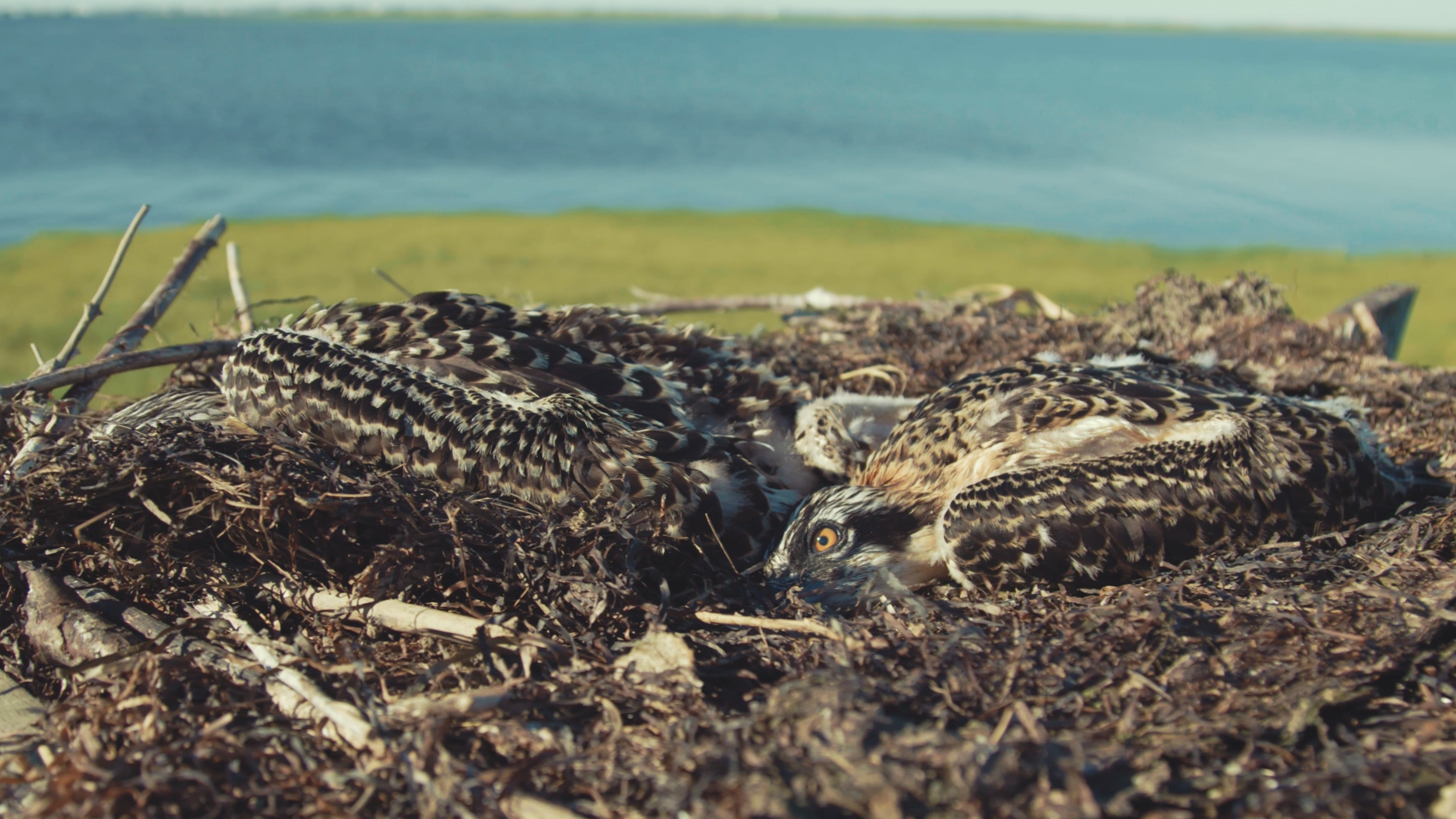 Conserve Wildlife -