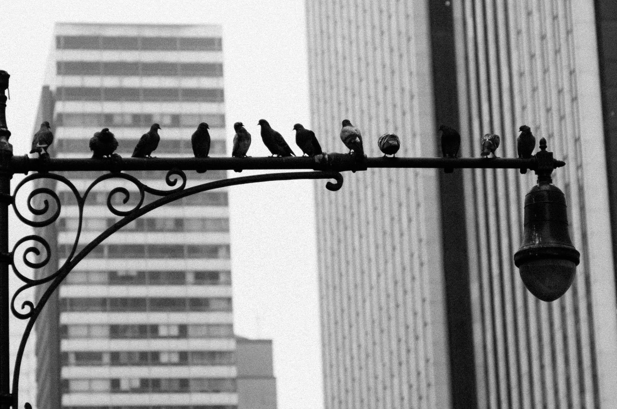 New York_20140609_K5_26863_©2014ArgunTekant.jpg