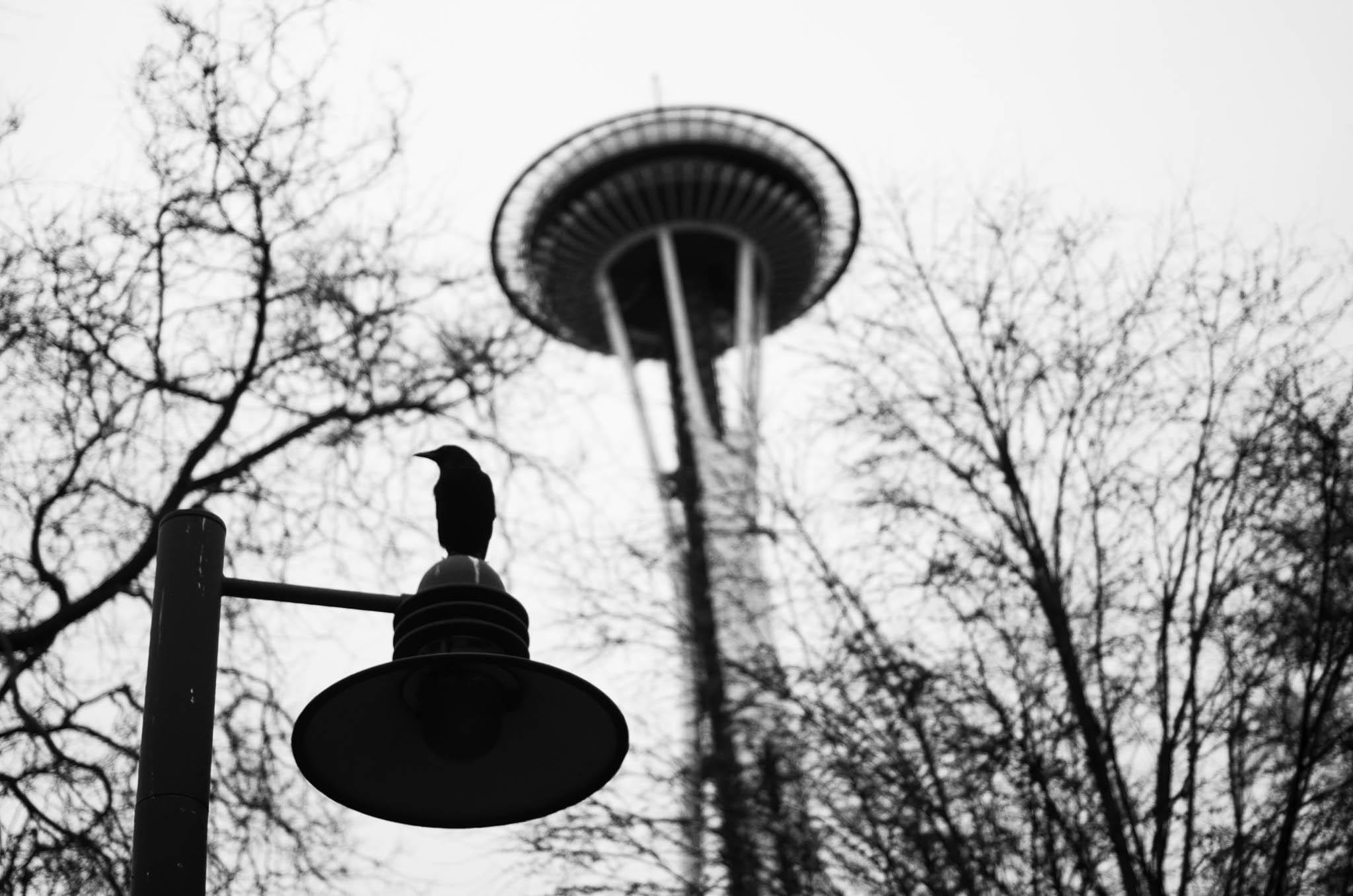 Seattle_20131215_K5_24944_©2013ArgunTekant.jpg