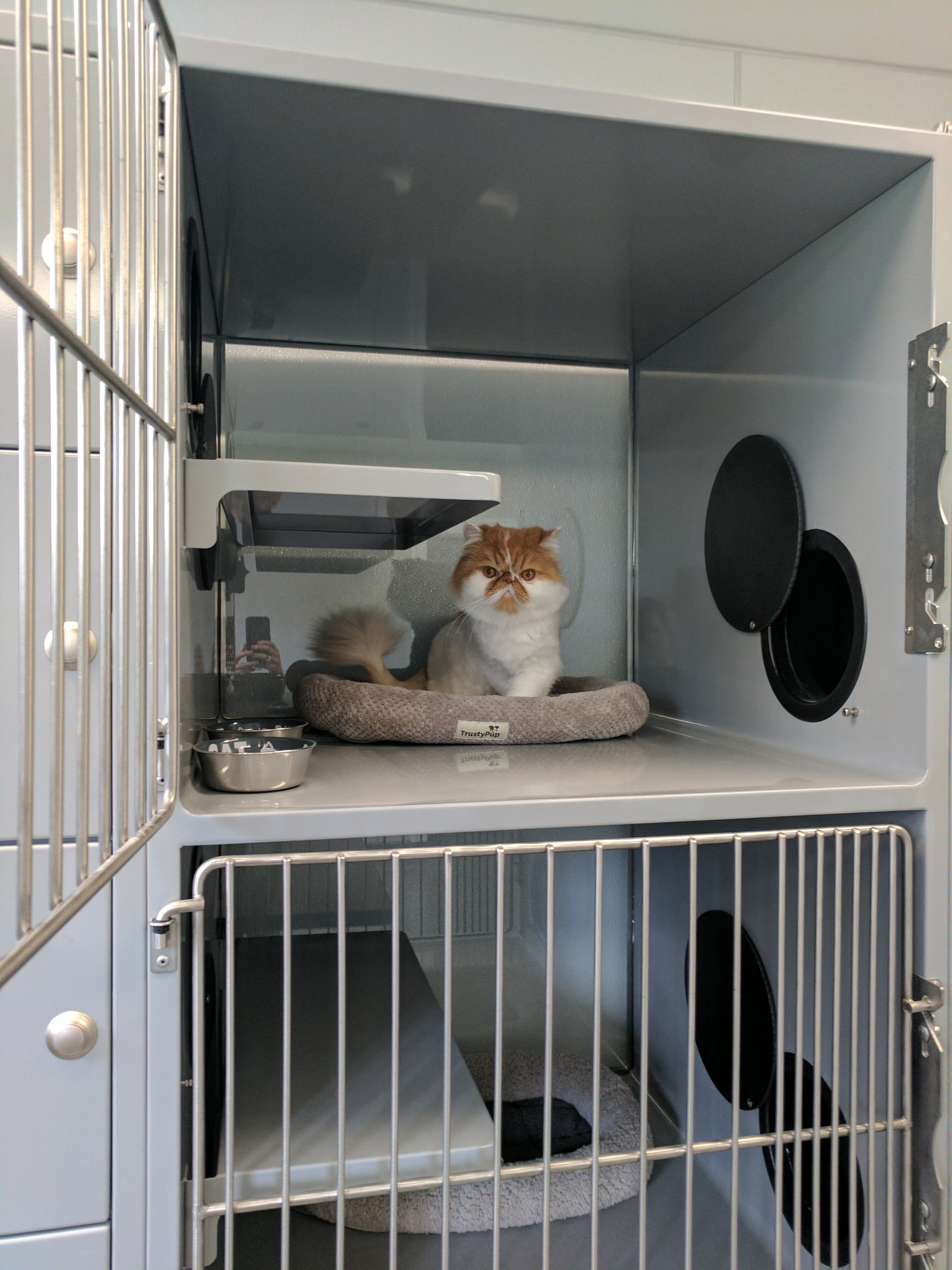 orange-and-white-cat-closeup.jpg