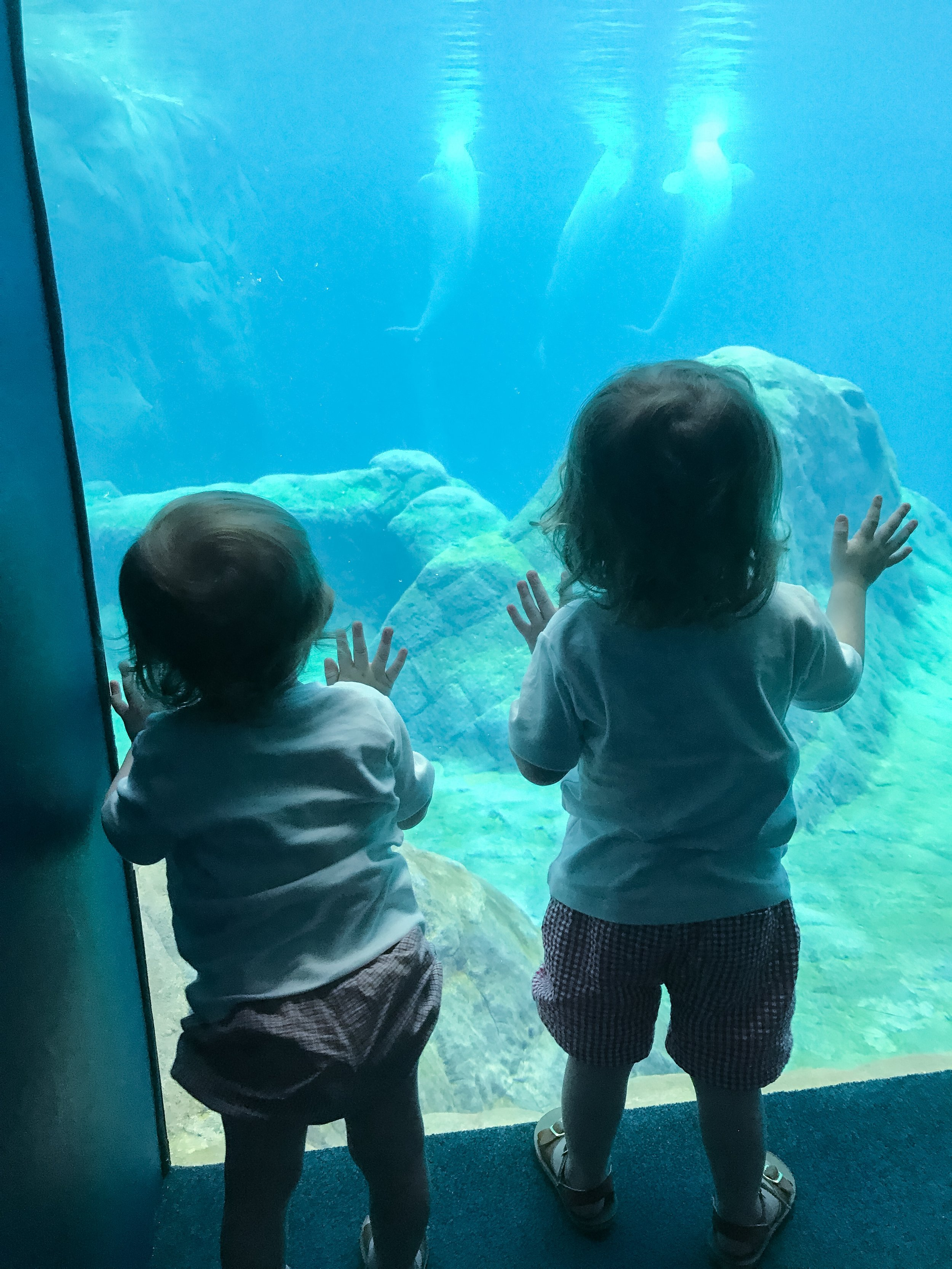 Their wonder and awe at the majestic creatures of God's creation was sweet to watch. (Featuring: the beluga whales!)