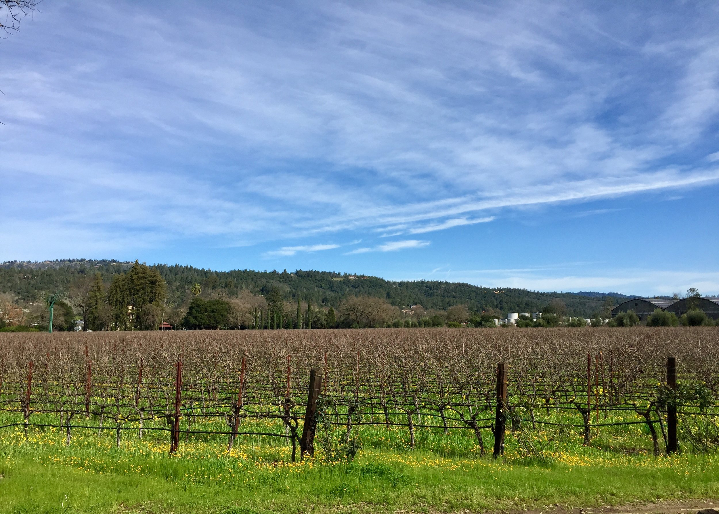 Beauty is abundant in Napa Valley