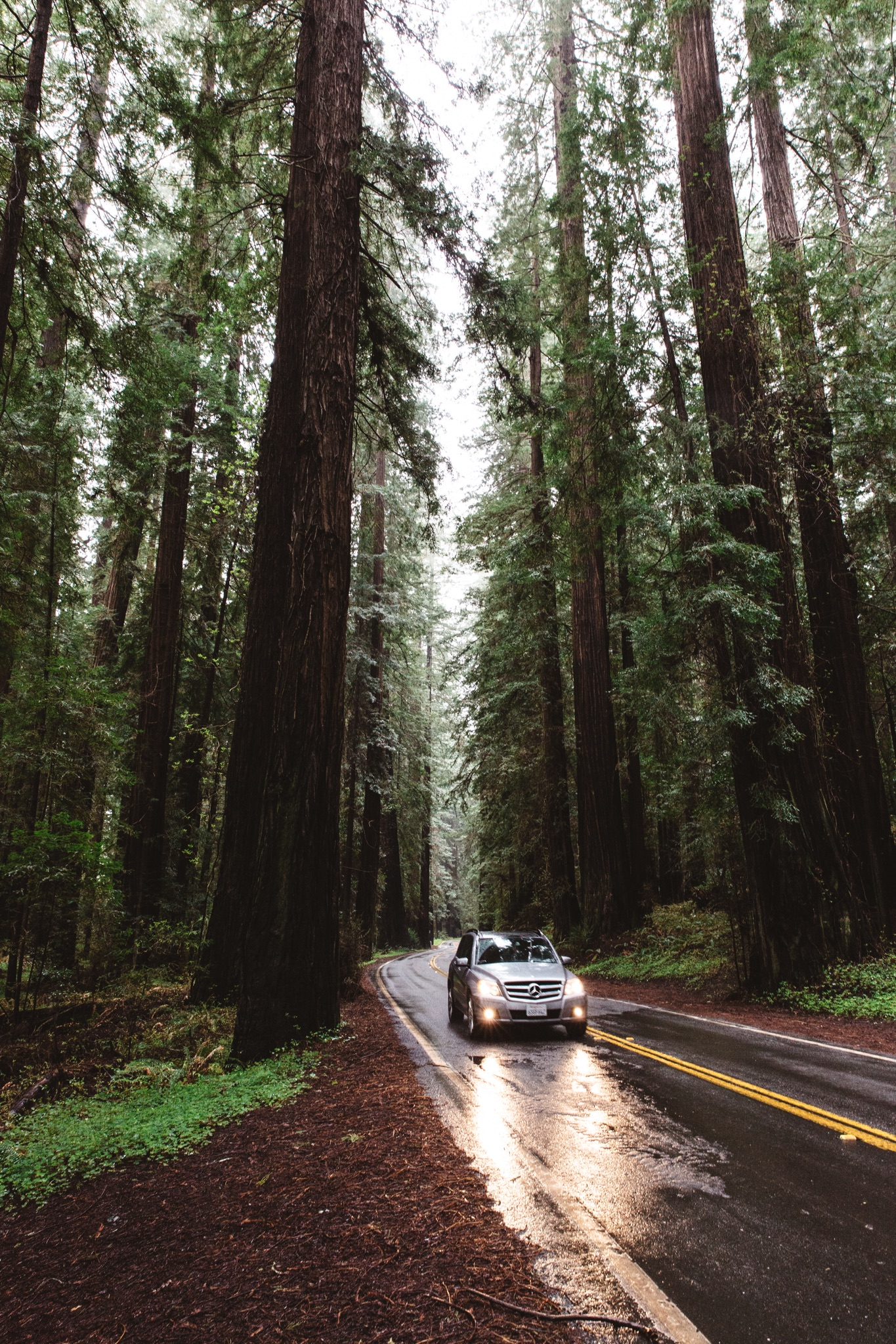 The Redwood Forest - California