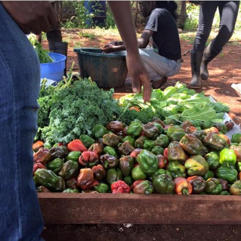 FARM UP JAMAICA LTD..png