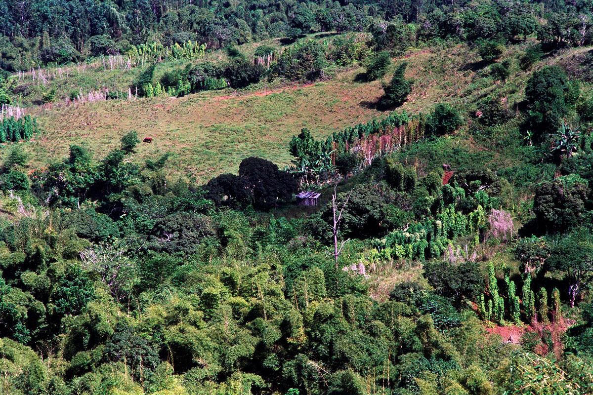 marley-natural-jim-mangan-jamaica-ganja-farmers-1.jpg