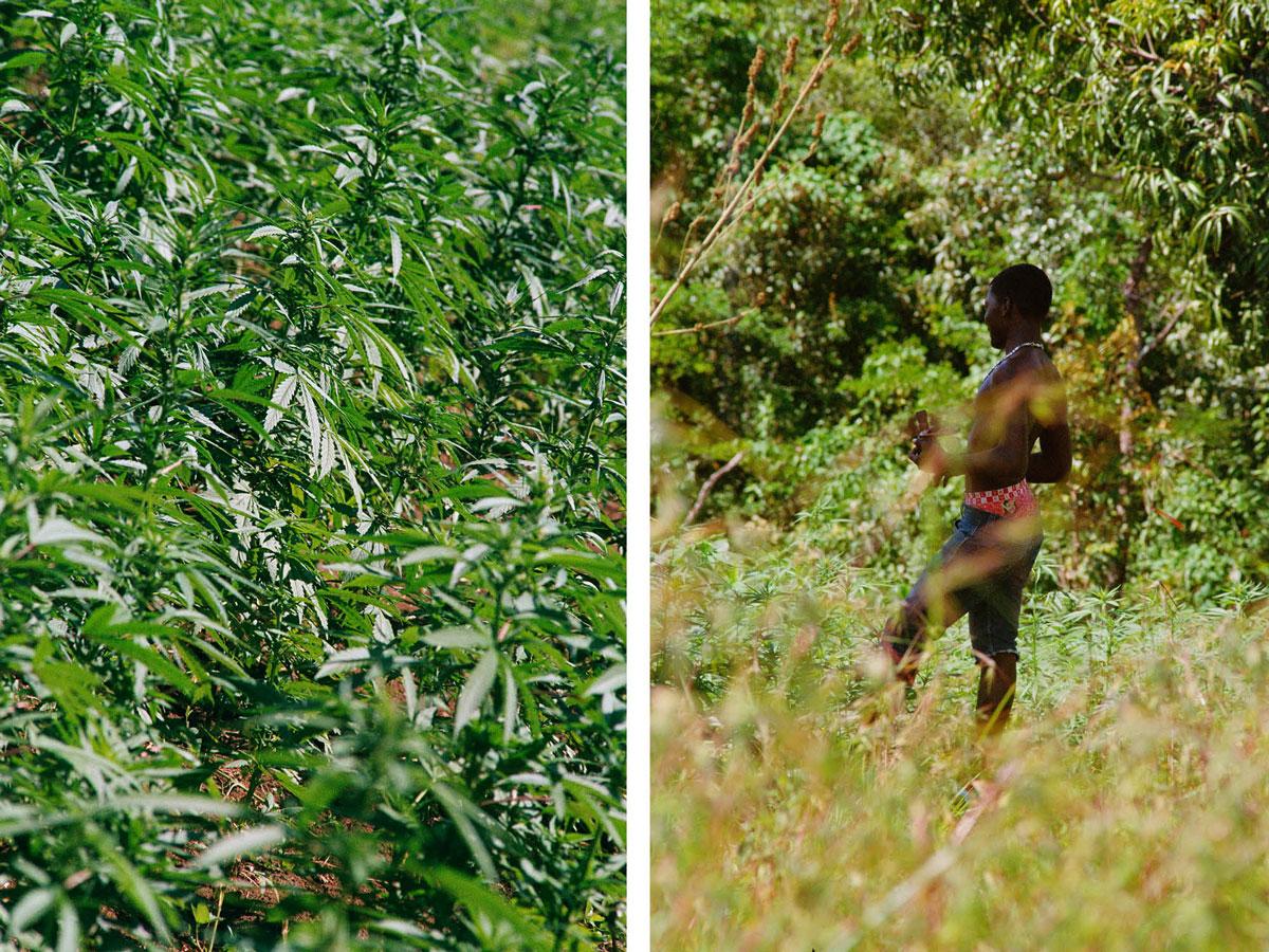 marley-natural-jim-mangan-jamaica-ganja-farmers-10.jpg