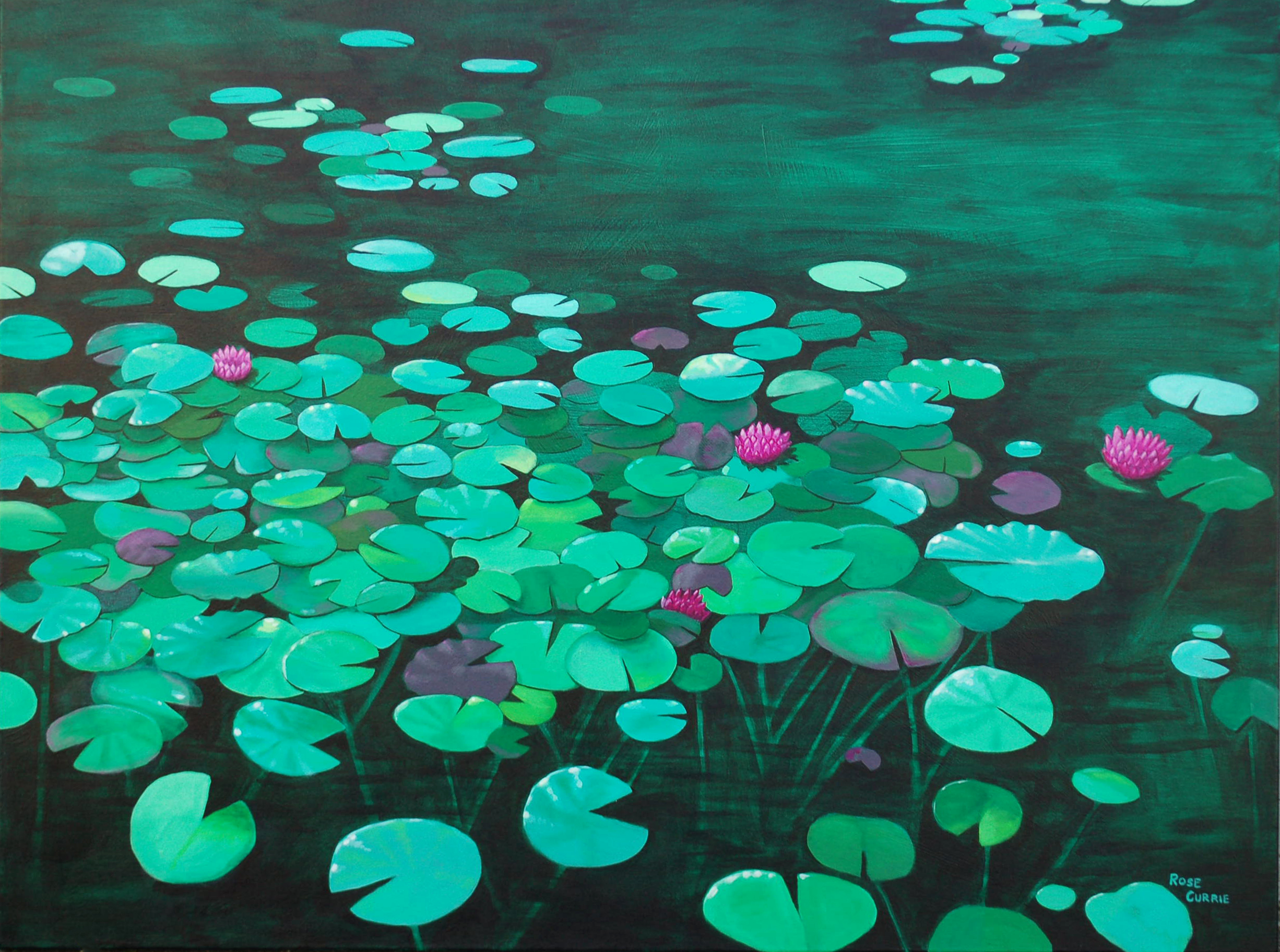 Water Lilies by the Parkside 2